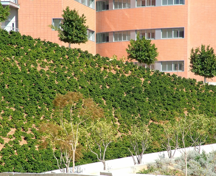 Green wall by Geocell -Rabin Center